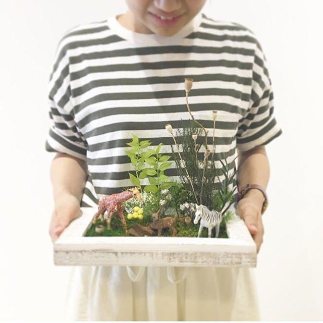 .プリザーブドの苔や植物で自分だけの苔ワールドを作りませんか♡?今年の夏休みのワークショップはお子さまと一緒に箱庭つくりもちろん、おひとりさまも大歓迎♩26㎝×16㎝のフレームに苔と植物そして小さな動物や恐竜、お家など自分だけの庭?ジャングル?ジュラシックワールド?作りましょう♩.7/29土 decolle  ①11:00〜 ②14:00〜7/30日 decolle  ①11:00〜 ②14:00〜8/5土  HÅUS ①11:00〜 ②14:00〜8/6日  HÅUS ①11:00〜 ②14:00〜材料費 2000円 ※ミニチュアフィギュアは別途料金になります.お問い合わせはHÅUSまで︎0852-61-5885