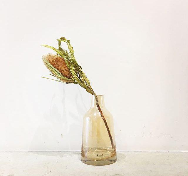 .オーストラリア原産のバンクシアひさしぶりの入荷です。.@haus_flower .#バンクシア#バンクシアプリオノート#banksia#オーストラリア#Australia#🇦🇺#preservedflowers #プリザ#hausmatsue #島根 #松江