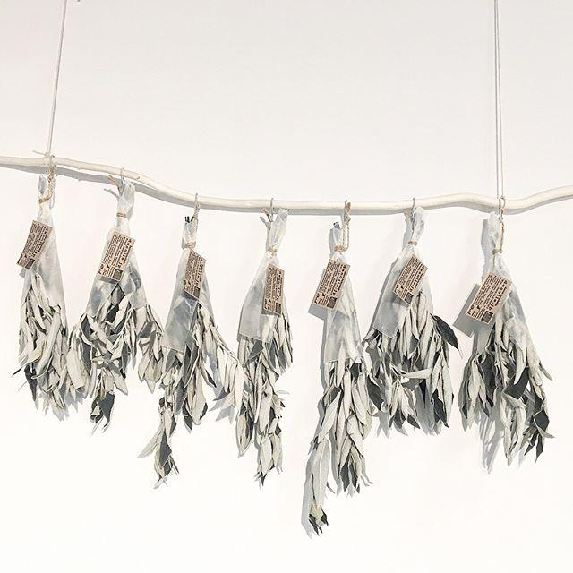 .甘い香りのするブットレア。入荷しました。.もわもわと毛羽立った葉は見てもさわってもやさしい気持ちになります。.#ブットレア#hanging#hausmatsue #島根#松江