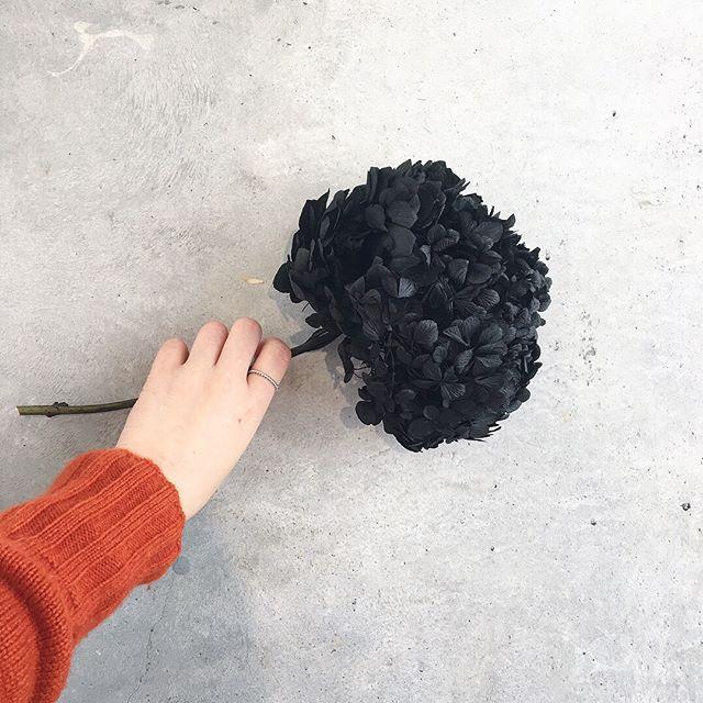 .雰囲気のある黒い紫陽花。光にかざすと深いグリーン。この色合いは現実にはなかなかないプリザならでは紫陽花。 .あわせてこちらもどうぞ︎@haus_flower ..#紫陽花#黒い紫陽花#プリザーブドフラワー #gift#hausmatsue #島根#松江