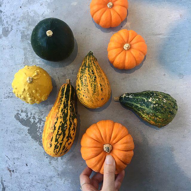 .もうすぐハロウィン。.色や形のおもしろいおもちゃかぼちゃとカンガルーの前足のようなカンガルーポー。.ちょっと不気味で可愛いものたちをお家に飾ってみませんか笑?.HÅUSのプリザのInstagramはこちらからどうぞ↓@haus_flower ..#Halloween#pumpkin#南瓜#おもちゃかぼちゃ#カンガルーポー#hausmatsue #島根#松江