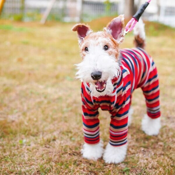 """🐕Coming """"GEORGE""""🐕.遂にHÅUSでも愛犬グッズのお取り扱いがスタートしましたサンフランシスコに本店を持つペット用品ブランド「GEORGE(ジョージ)」をはじめ、安全性とデザイン性にこだわり抜いた愛犬グッズを取り揃えております!.ペットはもはや家族の一員。「家族の一員」ということを前提に、ご自身の愛犬をとことん豊かにするものを取り揃えました。疫学に基づいて作られたドッグフードは体内から健康に。デザイン性の高い衣類やおもちゃは愛犬を見た目からドレスアップさせます。愛してやまないワンちゃんにマッチするものがきっと見つかるはず。。。.クリスマスに合わせご自身の愛犬へ、または愛犬家のご友人へのプレゼントにいかがでしょうか選り取り見取りのラインナップでお待ちしております!この週末はぜひHÅUSへお越しくださいませ.#george#partyanimal#dog#ドッググッズ #ドッグウェア #haus #haus_matsue #hausmatsue #松江カフェ #島根カフェ #松江 #島根 #山陰"""
