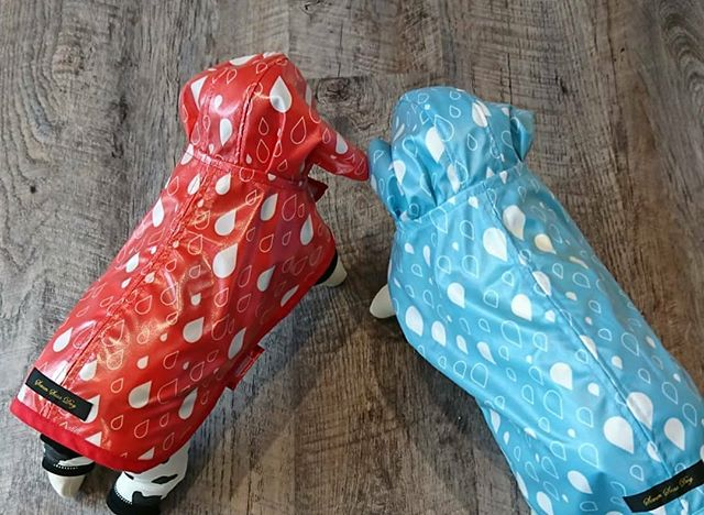 雨の日のお出かけにレインコートはいかがでしょうか。綺麗なレッドとブルーの2色がございます。サイズはXXSからXLまで。マジックテープなので、脱ぎ気も簡単に出来ますよ。是非一度お店に見に来てみて下さい。groomhaus松江市乃白町20270852-61-5885open  9:00close 18:00@groom_haus#groomhaus#松江市ペットサロン#松江市ペット #松江市グルーマー#トリミングサロン#松江 #島根
