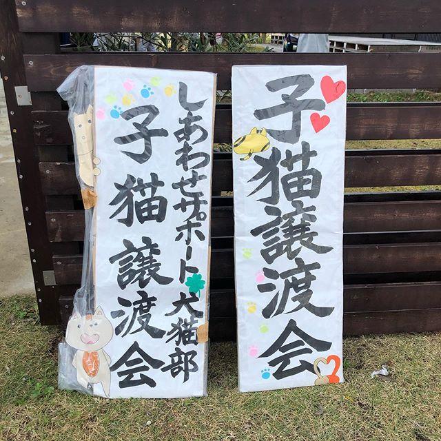 .秋晴れで気持ちの良い天気になりました。.本日GROOM HAUSにて犬猫譲渡会を10:00〜14:00まで開催しております。.ワンちゃん、ネコちゃんが素敵なご縁を待っています.GROOM HAUS松江市乃白町20270852-61-2885open  9:00close  18:00@haus_matsue#松江トリミング #松江トリミングサロン#松江ペット#松江ペットサロン#松江#島根
