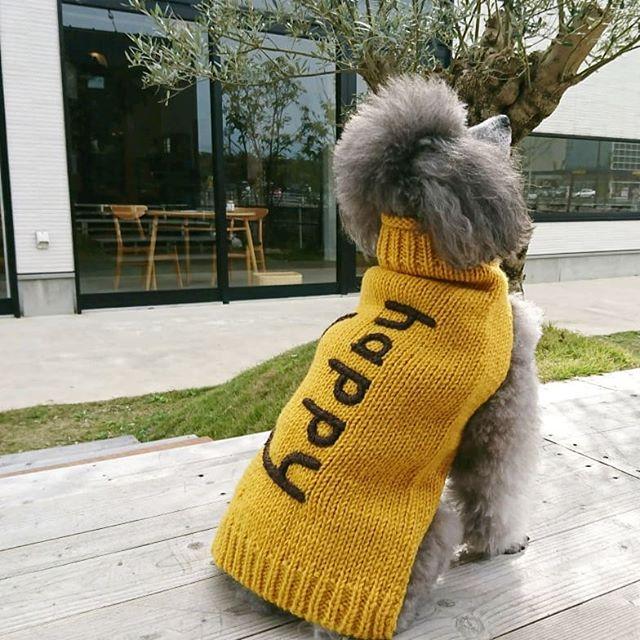 ..【Happy ニット】.ネパール人のニット職人さんが、作った手編みの愛犬用ニット。 .Happyの文字を刺繍したセーターです。.わんちゃんが走るとHappyの文字が可愛くて、飼い主様もHappyになれそうですねGROOM HAUS乃白町20270852-61-2885open  9:00close  18:00@groom_haus#松江トリミングサロン #松江トリミング #松江ペットサロン #松江ペット #george #hausmathue #haus #groomhaus