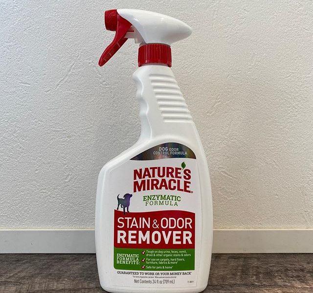 .【natures miracle 酵素配合スプレー】.しつこいシミやイヤな臭いを自然酵素の力で液体に分解し落とします。.汚れに含まれる酸を中和させることでカーペットの色やフロア表面の光沢落ちも防ぎます。.トイレ回りやケージ、オシッコの付いたカーペットなど、シミや悪臭のもとを酵素が液状に変化させ、布で拭取ることにより臭いを取り除きます。.白いTシャツやシャツなどちょっと黄ばんできたかな?と思うとネイチャーズミラクルを入れて洗うと白が生き返ります○.犬用にも人用にも使えるオススメです◎.GROOM HAUS松江市乃白町20270852-61-2885open  9:00close 18:00@haus_matsue #松江トリミングサロン #松江トリミング #松江スパシャンプー#松江ペットサロン #松江ペット #松江#山陰#島根#hausmathue #groomhaus